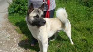 Derby City Council are appealing for people to come forward to give a dog a home.