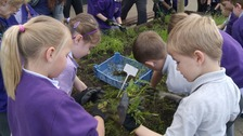 Children at Mile Cross Primary School do some weeding at launch of Countryside Classroom scheme