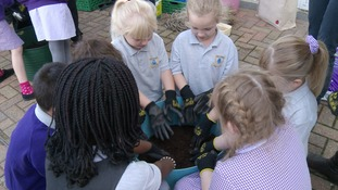 Pupils at Mile Cross Primary planting seeds