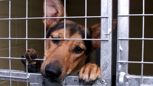 Thousands of dogs are abandoned every year.