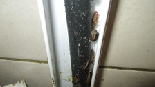 Cockroaches found by inspectors inside a restaurant in London.