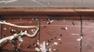 Rat droppings found behind a fridge by inspectors.