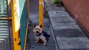 Appeal over abandoned dog, found tied to a pole