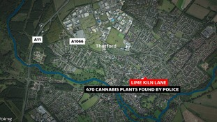 Police seized 470 cannabis plants during a raid in Thetford, Norfolk.