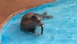 Celebration the seal pup
