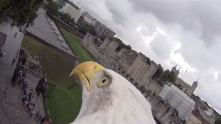 Bald Eagle equipped with camera captures breathtaking footage of London skyline