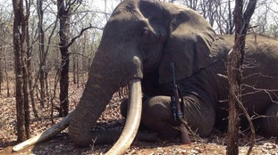 The celebration of the trophy kill has sparked a furious online response.