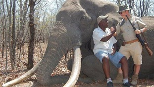 Hunter condemned for shooting huge African elephant