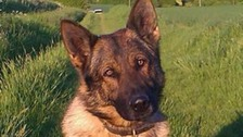 Police dog Blue helped track down a missing teenage in Baldock, Hertfordshire.