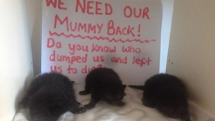 Only three of the five kittens survived the ordeal, after they were found inside a skip in Swindon