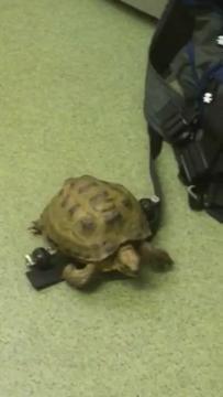 Harry the Tortoise speeds round the surgery