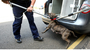 Crackdown on dangerous dog owners