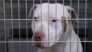 Owners of dangerous dogs to face crackdown