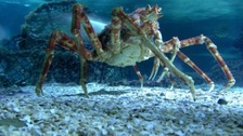Giant crustaceans exhibition