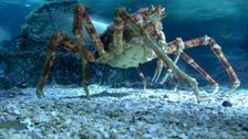 Giant crustaceans exhibition