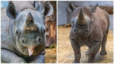 Manyara and Nkosi are the new addition to the animal family at Folly Farm.