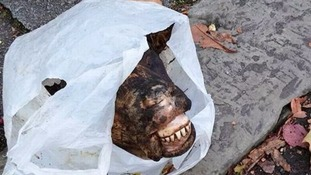 Animal head found on a street in Manchester