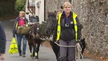 100 mile trek completed by Dartmoor ponies