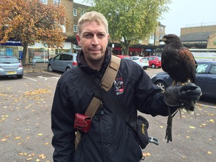 Richard Henderson and one year old Goose, the male Harris Hawk