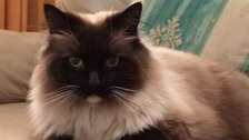 Cat Ykiyo's body was found mutilated by her owners in Croydon