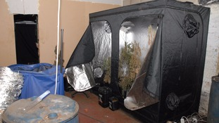 The cannabis plants were seized in Houghton earlier this month