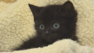 It takes longer to rehome black cats than any other kind