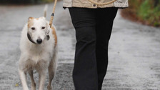 Councils used terror laws to investigate dog fouling