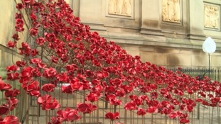 Hundreds of poppies make up the installation