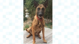 Meg the police dog has gone missing