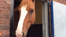 Fimber served force for 11 years