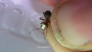 Ant on thumbnail