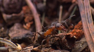 Ant on forest floor