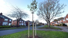 The second tree that has been planted outside the 78-year-old's home