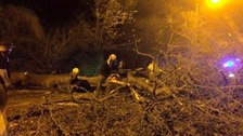 A tree falls and blocks a road in Rugby