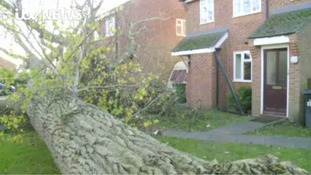 Treefall in Didcot