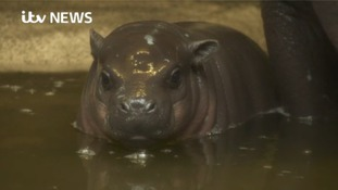 Watch: adorable new arrival at Bristol Zoo