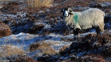 Cold weather alert issued for Yorkshire and the Humber