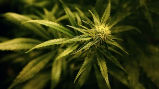 Four people charged after Scottish Borders cannabis raids