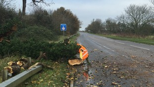 A tree blown down at Roxton in Bedfordshire close to the A1 Black Cat roundabout.