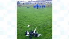 Junior football team's outrage over dog fouling