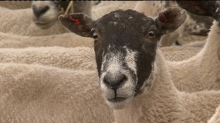 Deadly livestock disease hits South West