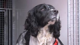 Tributes to Nelson the Fire Dog