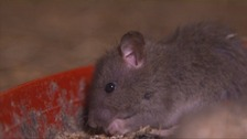 Calls for action after residents say they are 'plagued by rats'