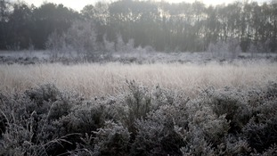 A frosty Chobham Common in Surrey at the weekend