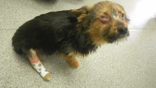 Set alight, fed drugs and left with a broken neck - one of the worst cases of animal cruelty the RSPCA has ever seen
