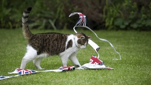 Larry the cat Downing Street
