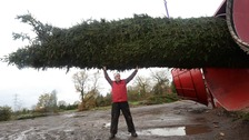 The world's biggest Christmas tree wrapper, capable of encasing 80-foot conifers was purchased by the brothers for $500,000