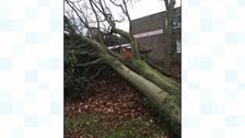 High winds cause tree to fall down