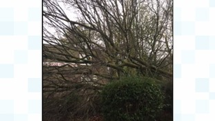 This tree has come down in Glossop