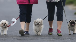 Dog owners in Daventry will be fined £100 if they do not produce a dog poop bag.